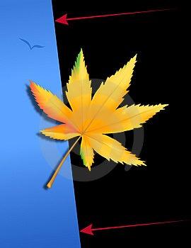 Folha Da Marijuana Foto de Stock - Imagem: 724160