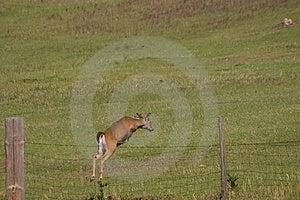 Freedom Leap Stock Photography - Image: 726372