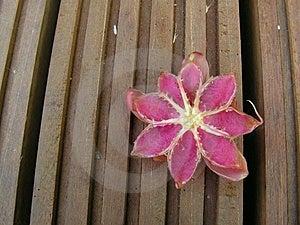 Fruit Flower On Wood Royalty Free Stock Image - Image: 734836