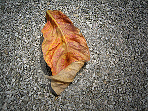 Dry Leaf Stock Photography - Image: 743532