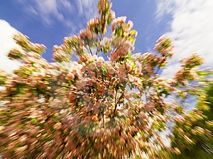 Zoom/motion Shot Of Peach Blossoms Royalty Free Stock Photo - Image: 744985