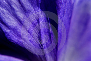 Abstract Background - Petal Stock Photography - Image: 745632