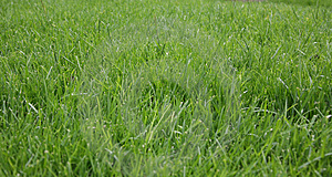 Bright Green Grass Background Royalty Free Stock Photography