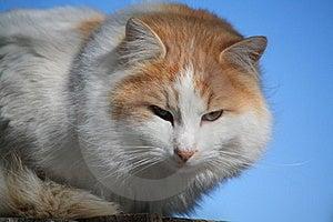 Feline Cat Stock Image - Image: 7430831