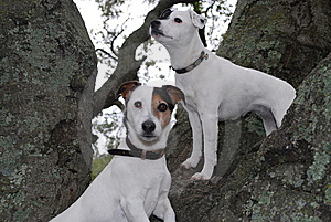 Two dogs sitting on a tree