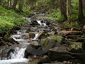 Stream in forest Free Stock Image