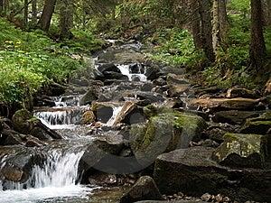 Strom Im Wald Lizenzfreies Stockbild - Bild: 7492566