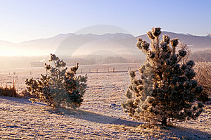 Frozen Trees In The Winter Stock Photo - Image: 7702020