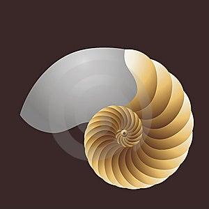 Pearly Nautilus Stock Photo - Image: 7702840