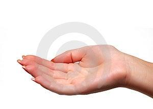Human Palm Stock Photos - Image: 7705473