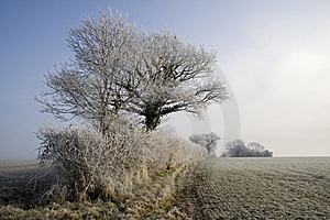 Winter Hedgerow Stock Photo - Image: 7705890
