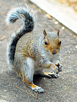 Squirrel Stock Photos - Image: 7719133