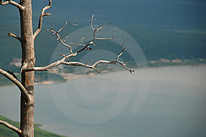 Dead Tree Hieroglyph Royalty Free Stock Photos - Image: 7723148