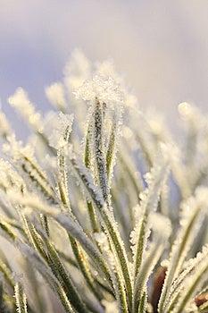 White Tree Royalty Free Stock Images - Image: 7729679