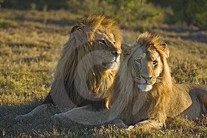 Father & Son Stock Photos - Image: 7731643