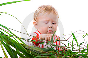 Interest To The Leaves Of Plant Royalty Free Stock Photos - Image: 7734168
