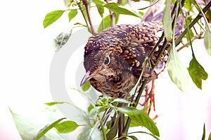 Bird Stock Photo - Image: 7736140