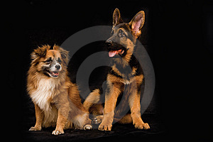 German Shepherd Puppy And Friend Stock Photography - Image: 7736692