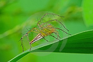 Lynx Spider In The Park Stock Images - Image: 7738094