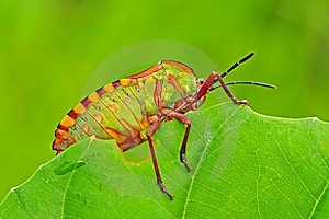 Colorful Stink Bug In The Park Stock Photo - Image: 7738100