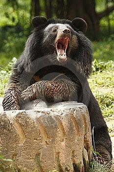 Bear Royalty Free Stock Image - Image: 7740136