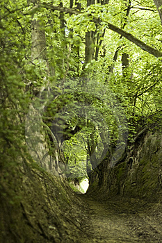 Green  Ravine Stock Photo - Image: 7740550