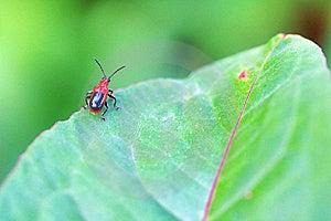 Bug Royalty Free Stock Photo - Image: 7740635