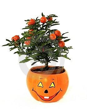 Plant In Fan Flower-spot Royalty Free Stock Image - Image: 7742716