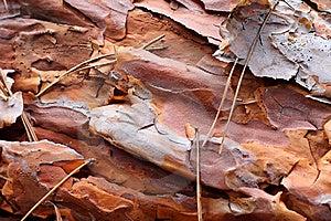 Old Pine Bark Stock Photos - Image: 7743043