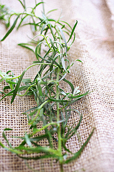 Tarragon On Tablecloth Royalty Free Stock Images - Image: 7751099
