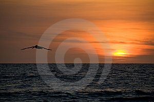 Pelikan Sunset Stock Photography - Image: 7752722
