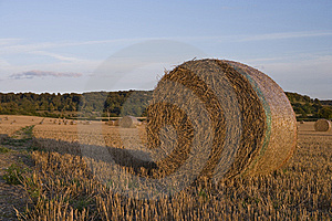 Harvest 2 Royalty Free Stock Images - Image: 7755299