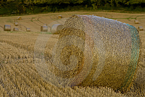 Harvest 3 Royalty Free Stock Photo - Image: 7755345