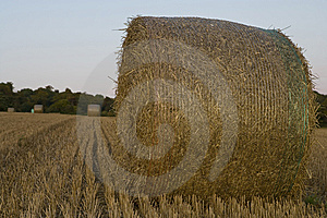 Harvest 4 Stock Image - Image: 7755501
