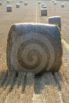Harvest Stock Images - Image: 7755744