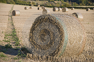 Harvest Stock Image - Image: 7755901