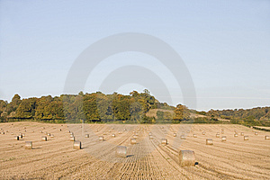 Harvest Stock Photo - Image: 7756120