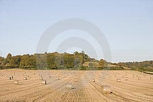 Harvest Stock Photo - Image: 7756120