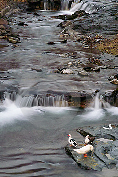 Mountain Stream, Apuan Alps Stock Image - Image: 7759751