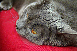 Feline Nap Stock Photography - Image: 7761102