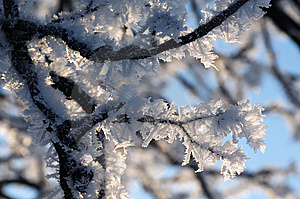 Frozen Branches Royalty Free Stock Photo - Image: 7764715