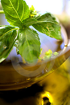 Olive Oil With Fresh Basil Stock Photography - Image: 7765432
