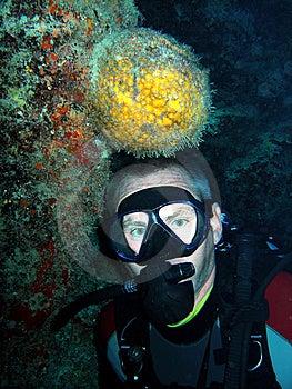 Orange Ball Sponge And Diver Stock Image - Image: 7768961