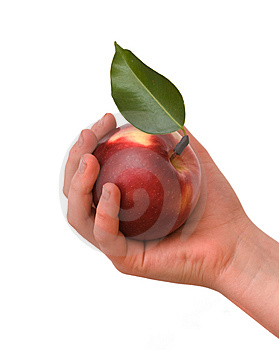 Girl's Hand With Apple Stock Photos - Image: 7769643