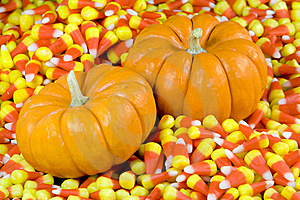 Mini Pumpkins In Candy Corn Royalty Free Stock Image - Image: 7782166