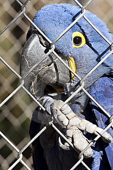 Parrot Bird In A Cage Stock Photography - Image: 7797012