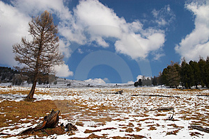 Alone Larch And Blue Sky. Stock Photos - Image: 782213