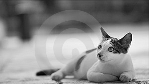 Cat Photo - Whimsical Stock Photo - Image: 789360