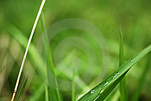 Dew Stock Photos - Image: 7805433