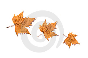 Leaves Stock Image - Image: 7809221